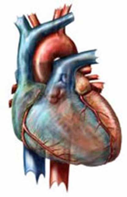 Để bảo vệ trái tim